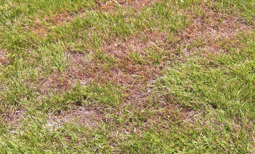 There S Dead Patches In My Lawn Lawn Solutions