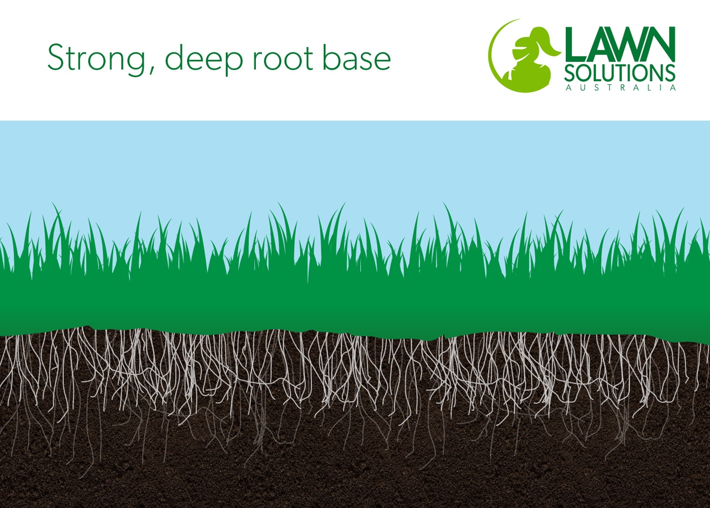 Strong deep root base