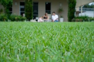 Grass Varieties Best Quality